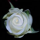 White Beauty by Michelle *