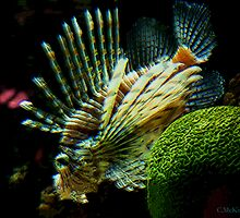 Lion Fish by Chris McKinney