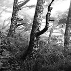 Trees at Yushan by Jeff Harris