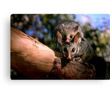 ~Possum Magic~ Canvas Print