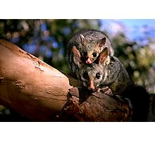 ~Possum Magic~ Photographic Print