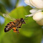 Bee in Flight by Greg Carlill