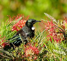 Nectar Feast - Tui NZ by AndreaEL