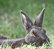 Bunny In The Grass by Scott Ruhs