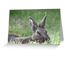 Bunny In The Grass Greeting Card