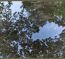 Puddle Reflections by PhotoArtBy Astrid