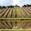 Echunga, South Australia by Michael Humphrys