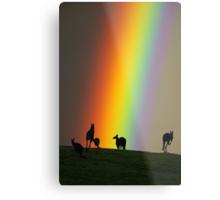 Kangaroos and Rainbow at Kangaroo Ground, Yarra Valley. Metal Print