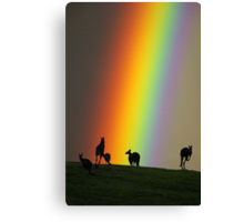 Kangaroos and Rainbow at Kangaroo Ground, Yarra Valley. Canvas Print