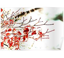 Snowy Maple Abstract Poster
