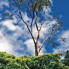 Sky Limbs by Richard  Leon
