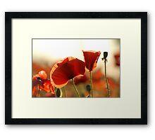 Poppy Petals Framed Print