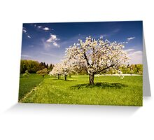Blossoming trees in spring Greeting Card