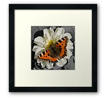 Butterflies and Dhalia's Framed Print