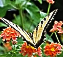 Eastern Tiger Swallowtail by Luann Gingras