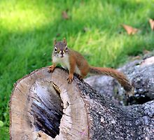 Squirrels Castle Is His Home by HALIFAXPHOTO