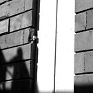 Rising shadows by Pascale Baud