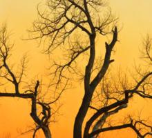 Winter Season Sunset Tree Sticker