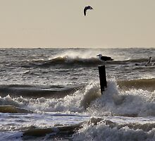 SEAGULL  POSTING AT THE ROARING NORTH SEA by Johan  Nijenhuis