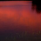 ruby red reflection by Roslyn Lunetta