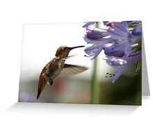 Happy Hummer Greeting Card
