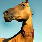 The golden horse of Turkmenistan by Dan Shalloe