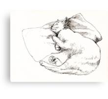 Chang snoozing Canvas Print