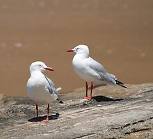 2 Seagulls, Flint & Steel Beach, Ku-ring-gai Chase National Park by Spirit Level Creations