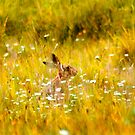 The summer Hare by Trevor Patterson