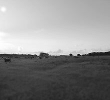 cows in the field by colleenboston