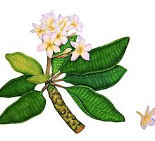 Frangipani Plus One by joeyartist