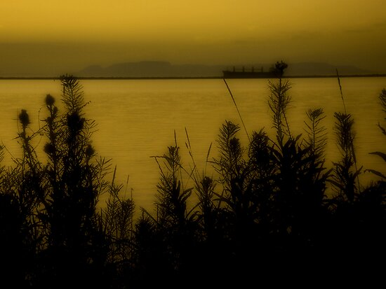 Golden Harbor by TingyWende