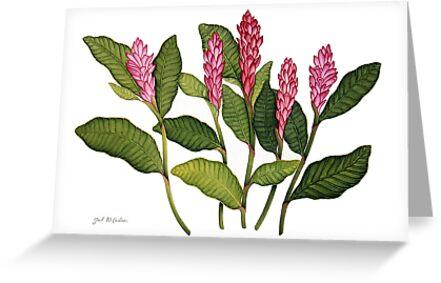 Red Ginger Botanical by joeyartist