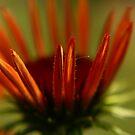 floris _the original by Aimelle