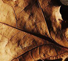Leaf on Wood by Clare McClelland