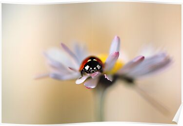 Daisy bug by Jacky Parker