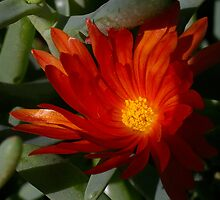 Flaming Orange Whorl by Eva & Klaus WW