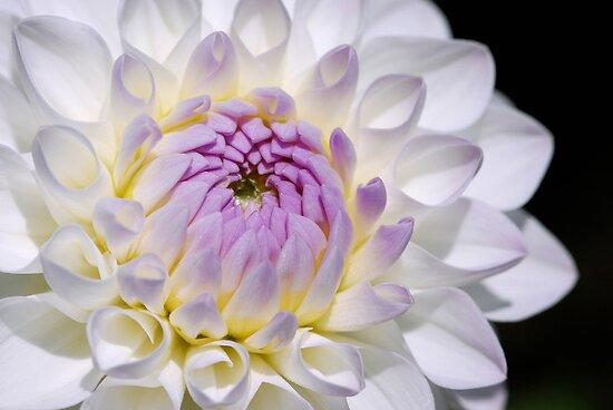 flowerheart by mc27