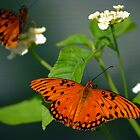 Two Gulf Fritillaries Sunning by patti4glory