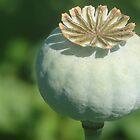 Poppy Seed Pod by Diane Petker
