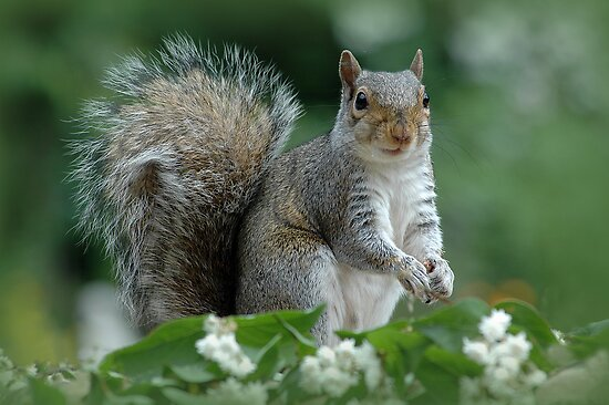 Squirrel surprise by Jacky Parker