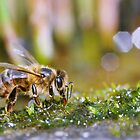 bee at work II by mc27