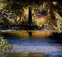 REFLECTION ON YAKIMA RIVER by MsLiz