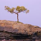 Where is this tree growing on rocks? by Meeli Sonn