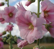 Flowers album by loiteke