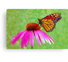 Monarch (butterfly) Canvas Print