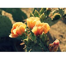 Prickly Pear Blooms Photographic Print