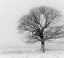 Solitude in winter by miketudge
