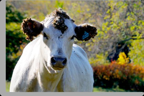 Cow   by Geoffrey