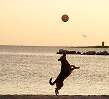 Dog Ball  Seagull Boy by daviddonabie